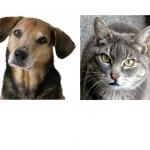 Dog - Cat Attitudes